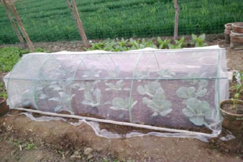 Insect Mesh Grow Tunnel, Insect Mesh Grow Tunnel Supplier, Insect Mesh Grow Tunnel Manufacturer, Insect Mesh Grow Tunnel Factory,Anti Insect Mesh Grow Tunnel Supplier, Insect Mesh Netting Grow Tunnel Supplier Micromesh growing tunnel Insect Mesh Netting Grow Tunnel Supplier, Micromesh growing tunnel Suppliers